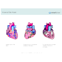 Views of the Heart