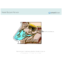 Nasal Septum Nerves