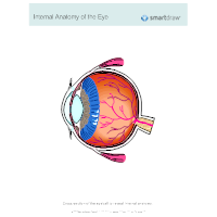 Internal Anatomy of the Eye