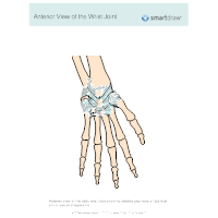 View of the Wrist Joint - Anterior