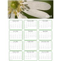 Daisy Calendar
