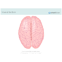 The Brain - Superior View