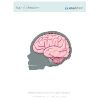 Brain of a Newborn