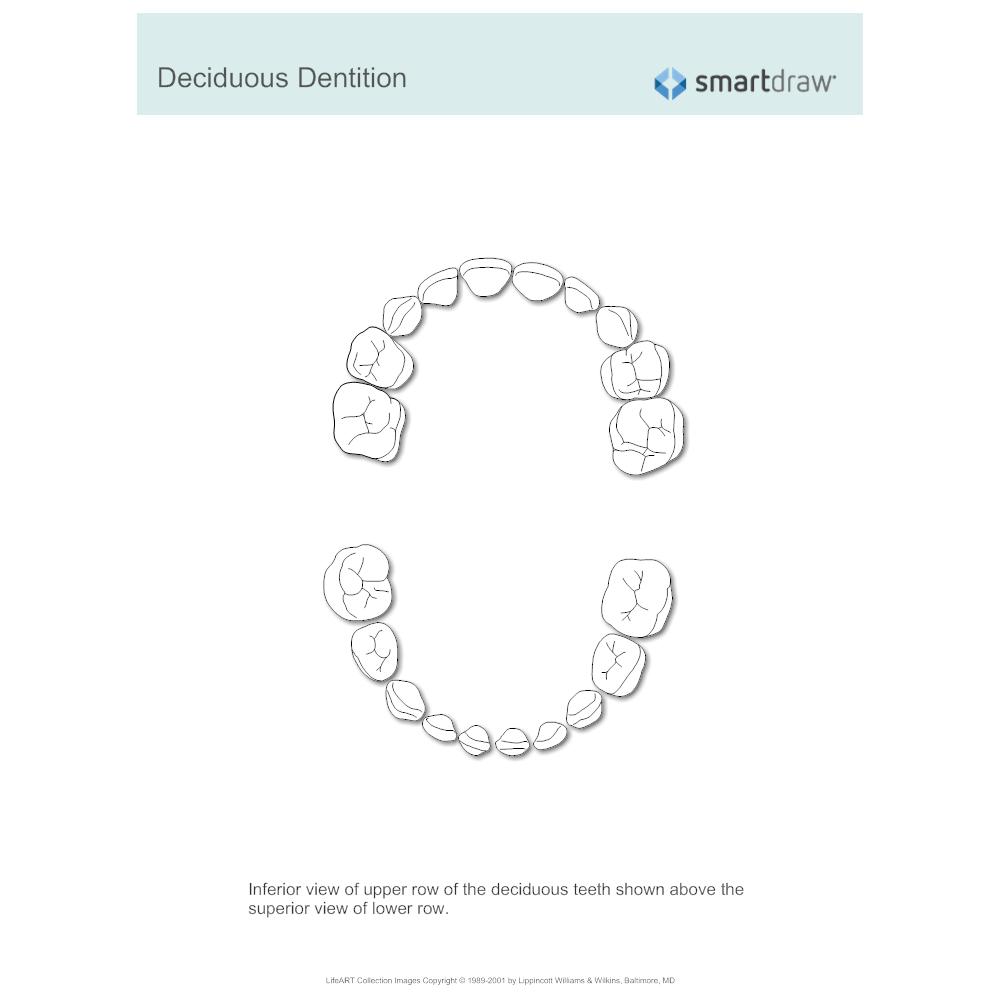 Example Image: Deciduous Dentition