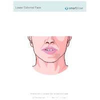 Lower External Face