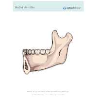 Medial Mandible