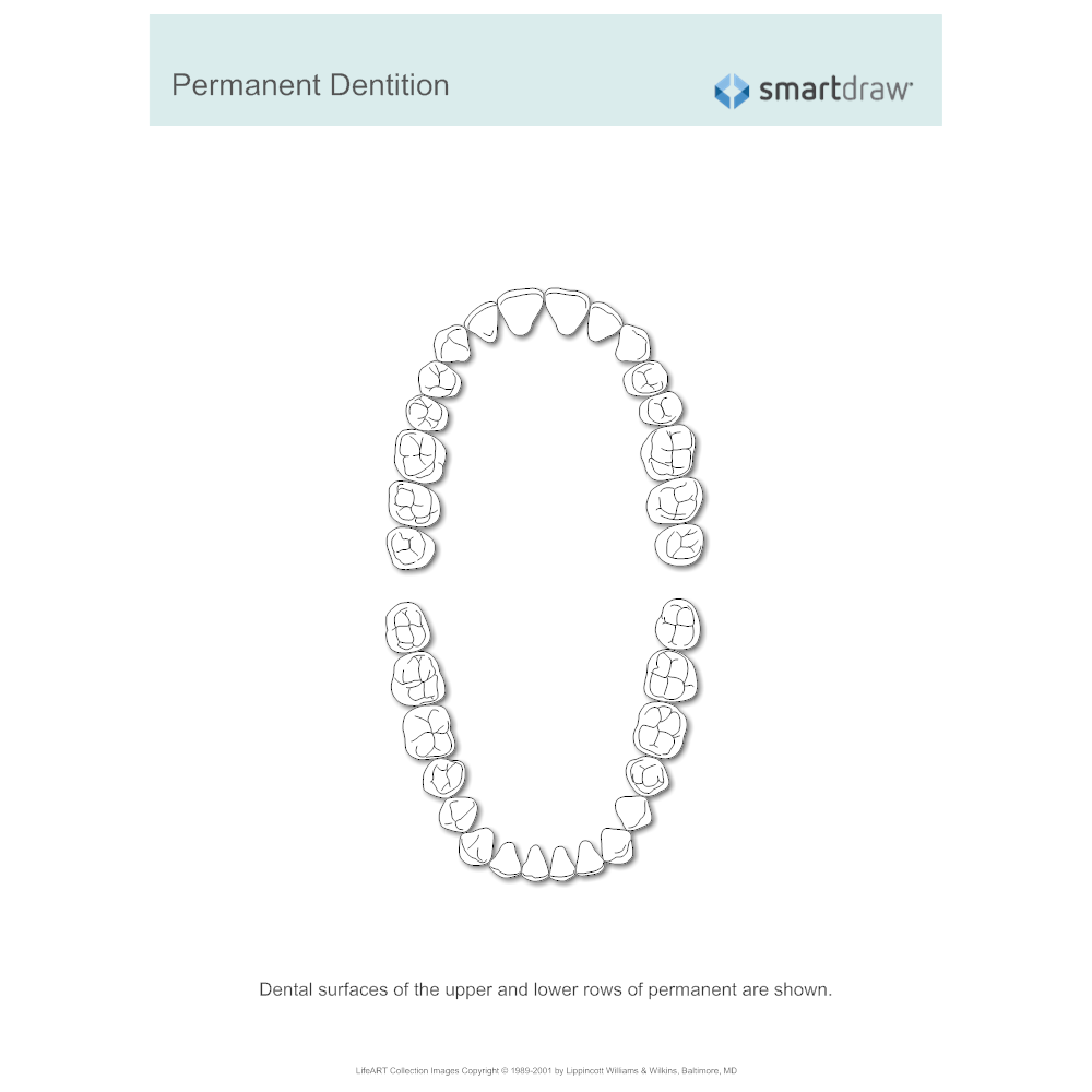 Example Image: Permanent Dentition
