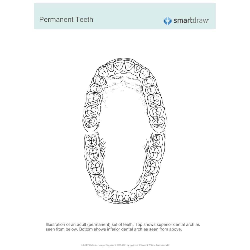 Example Image: Permanent Teeth
