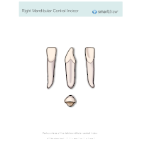 Right Mandibular Central Incisor