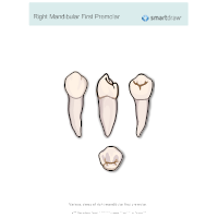 Right Mandibular First Premolar