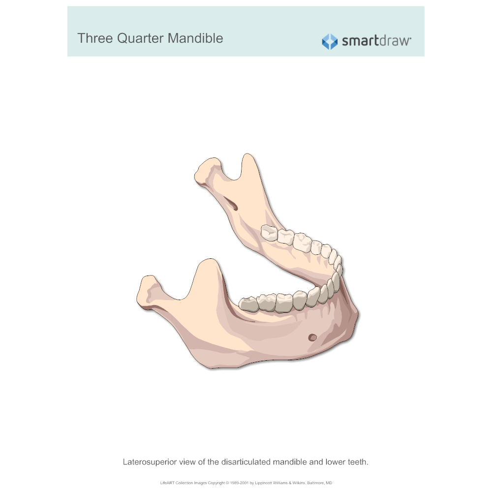 Example Image: Three Quarter Mandible