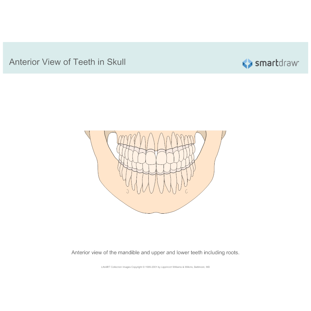 Example Image: View of Teeth in Skull - Anterior