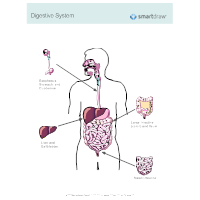 Digestive system diagram examples digestive system ccuart Images