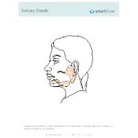 Salivary Glands