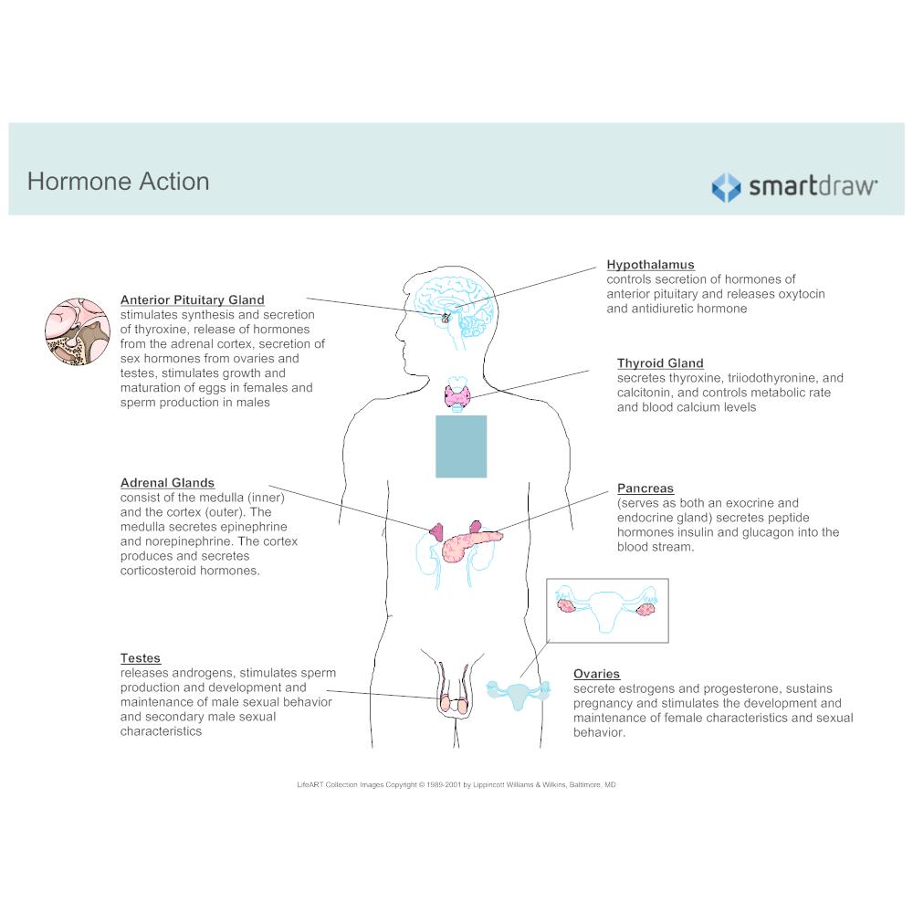 Which Endocrine Gland Secretes Sex Hormones The Endocrine System