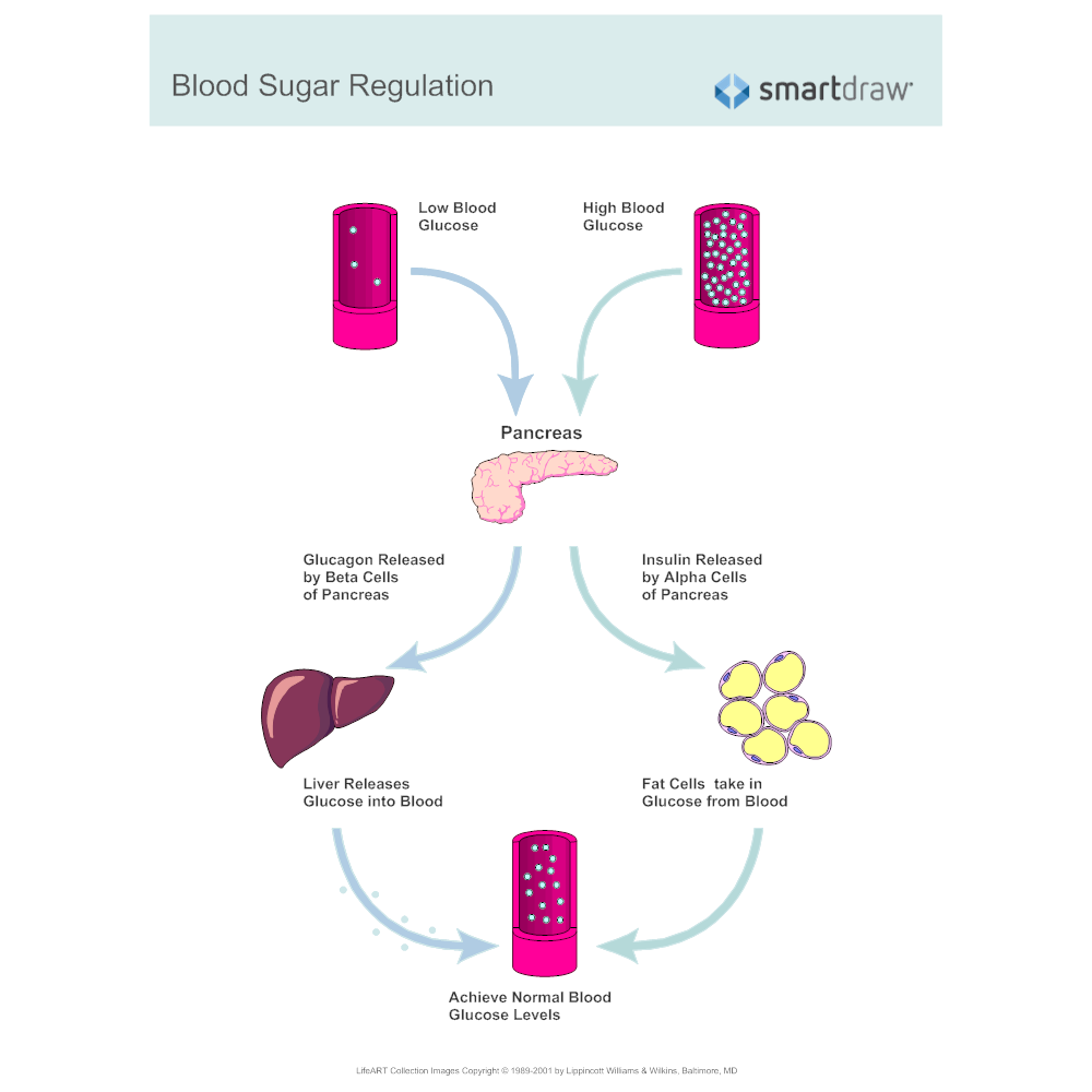Example Image: Blood Sugar Regulation
