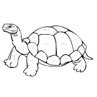 math diagram examples