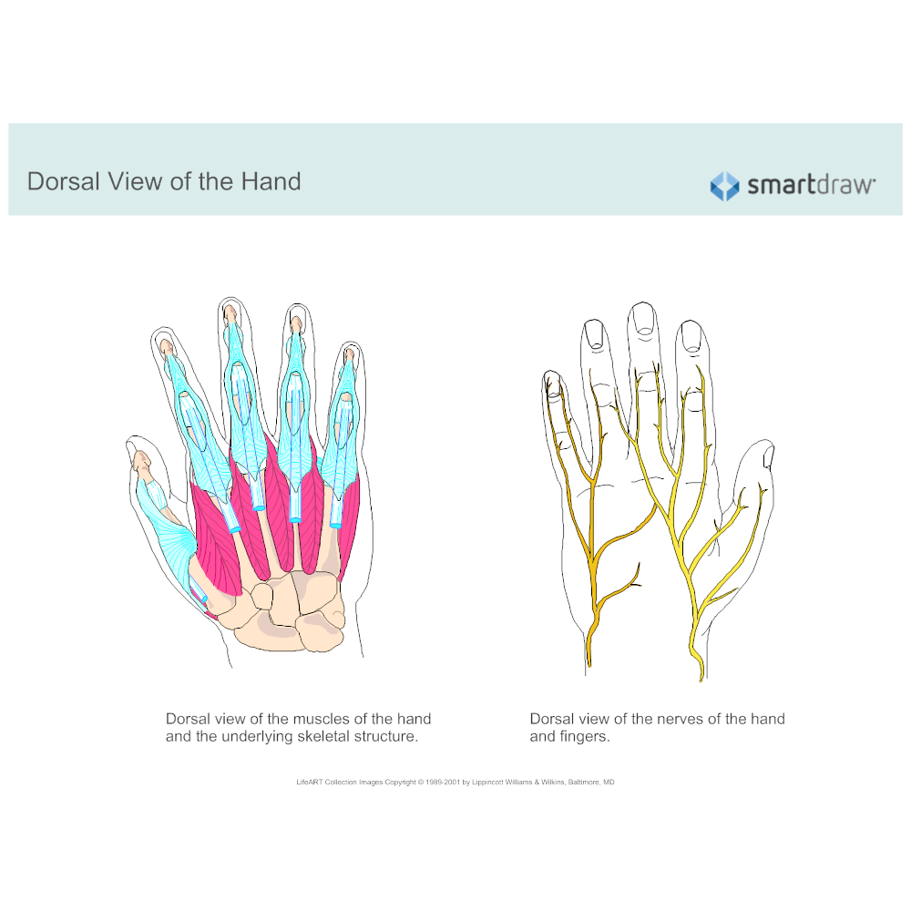 Example Image: Dorsal View of the Hand