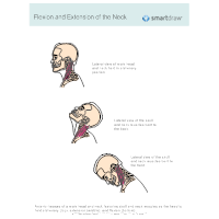 Flexion and Extension of the Neck
