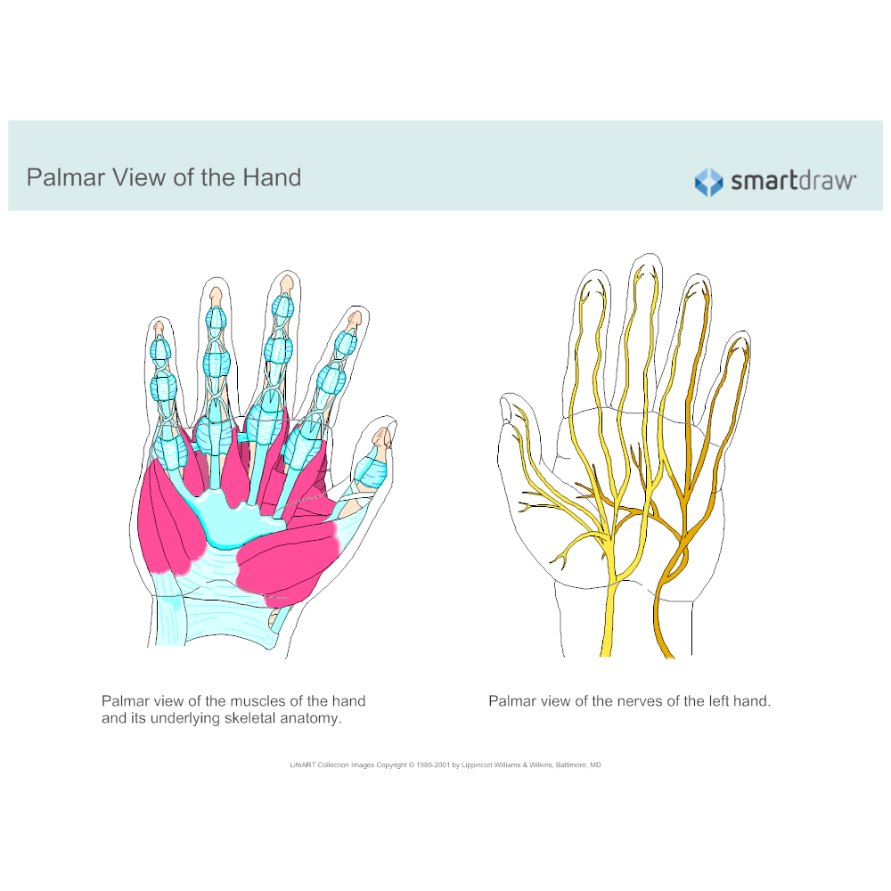 Example Image: Palmar View of the Hand