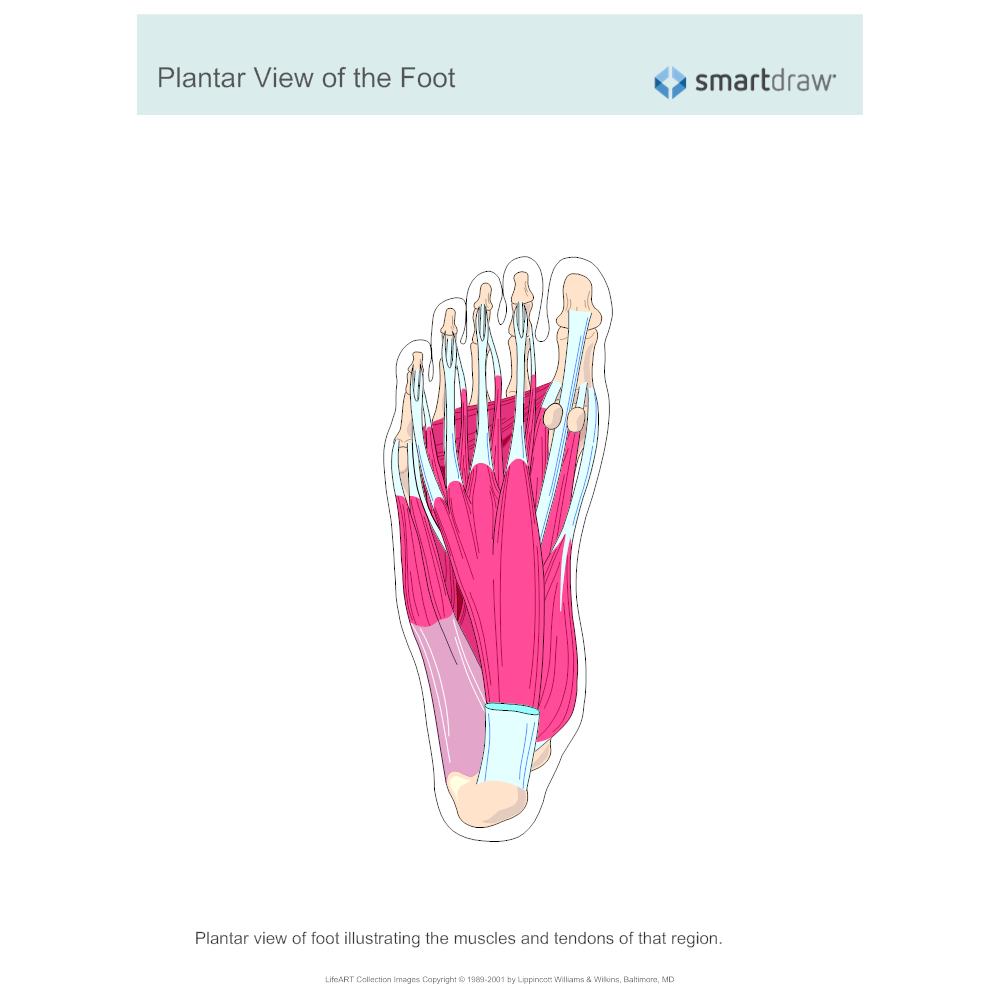 Example Image: Plantar View of the Foot