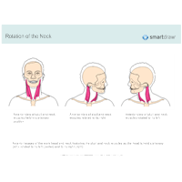 Rotation of the Neck