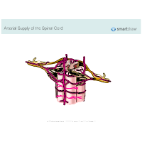 Arterial Supply of the Spinal Cord