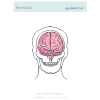 Brain & Skull - Anterior View