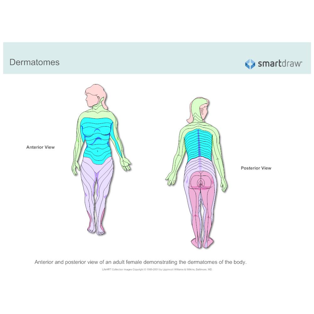 Example Image: Dermatomes