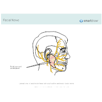 Facial Nerve and Parotid Gland