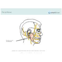 Facial Nerve and Parotid Gland