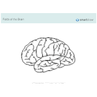 Folds of the Brain