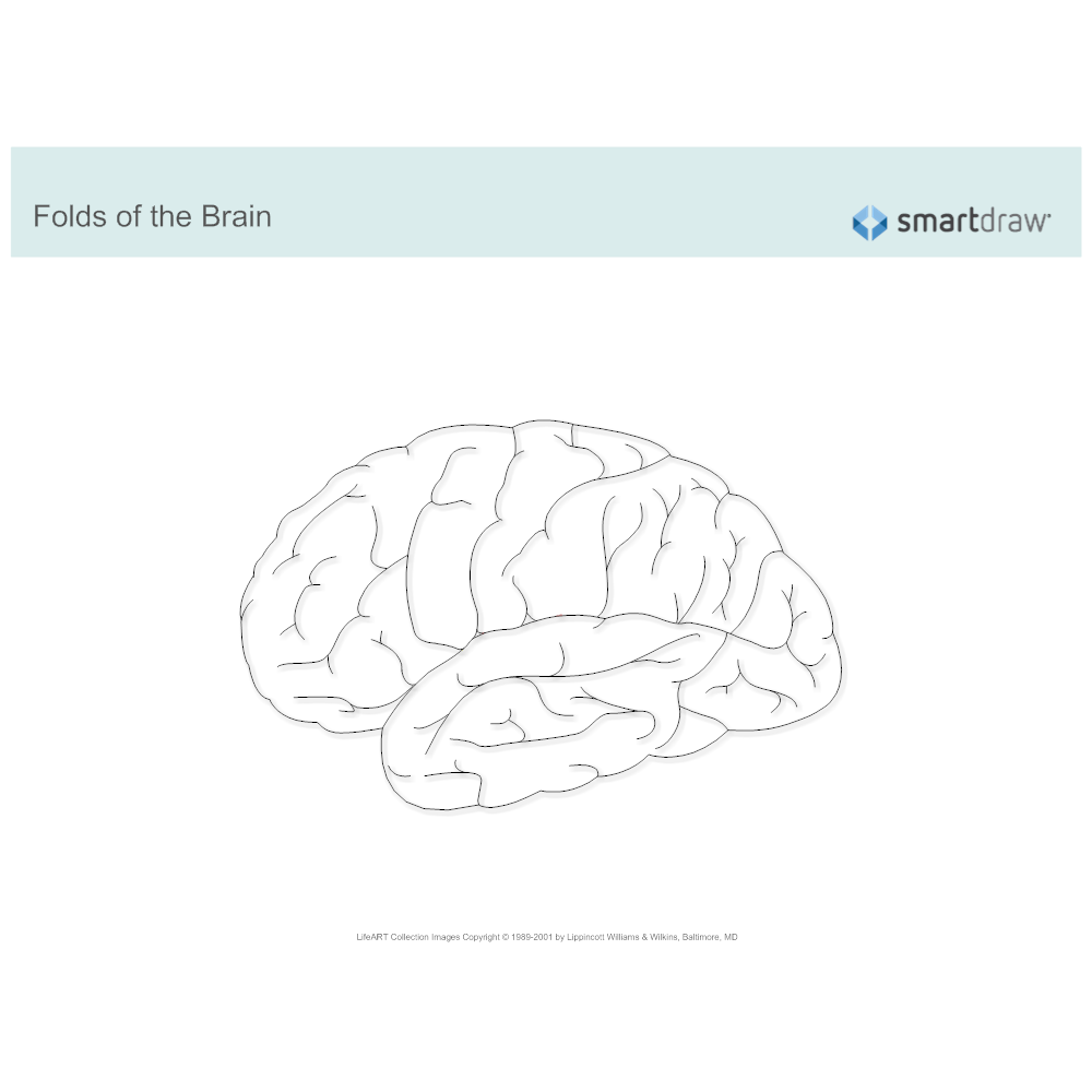 Example Image: Folds of the Brain