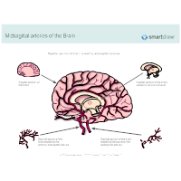 Midsagittal Arteries of the Brain
