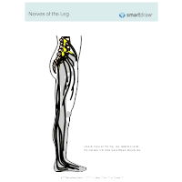 Nerves of the Leg
