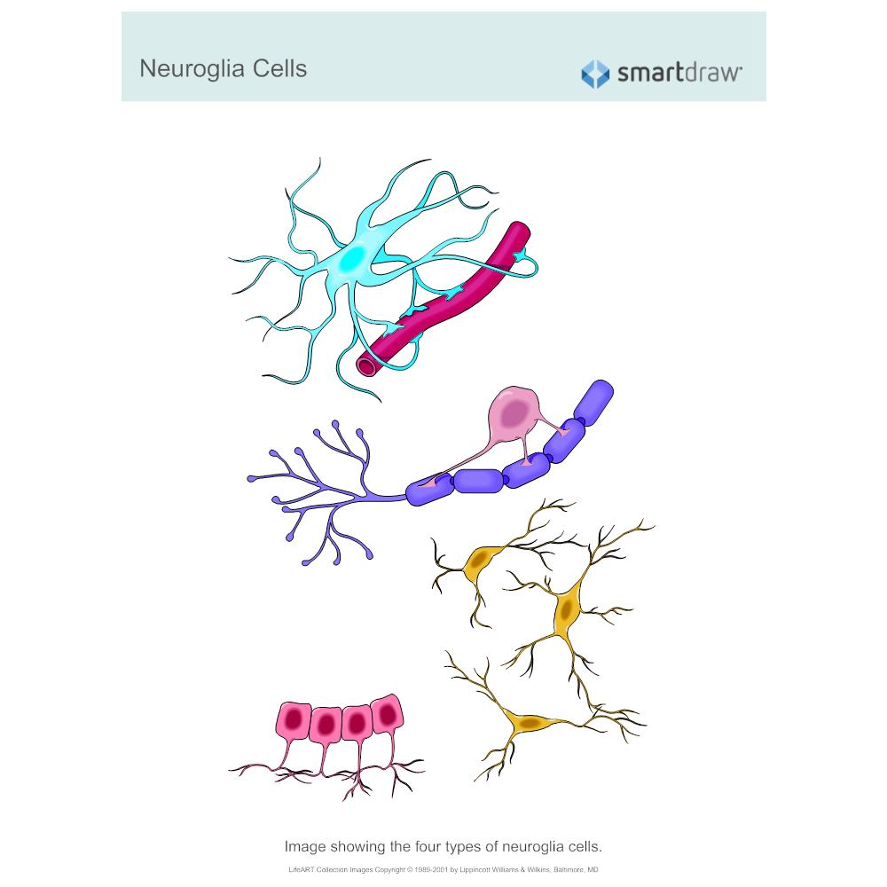 Example Image: Neuroglia Cells