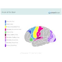 Regions of Brain