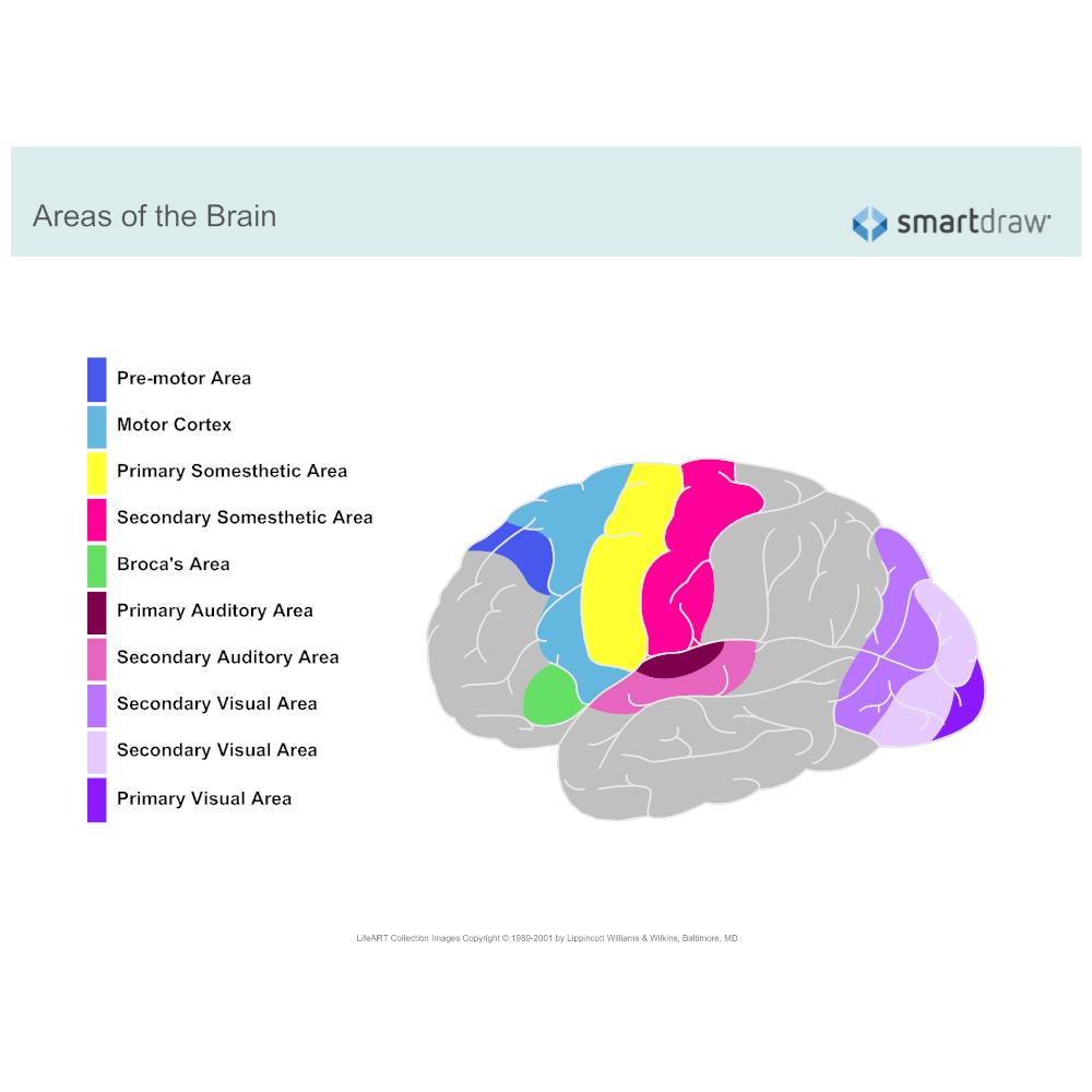 Example Image: Regions of Brain