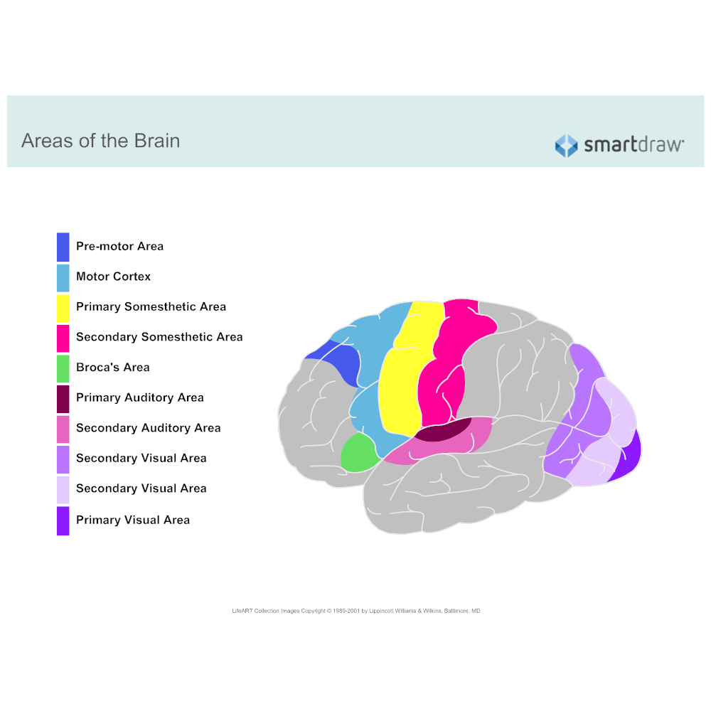 Example Image: Regions of Brain