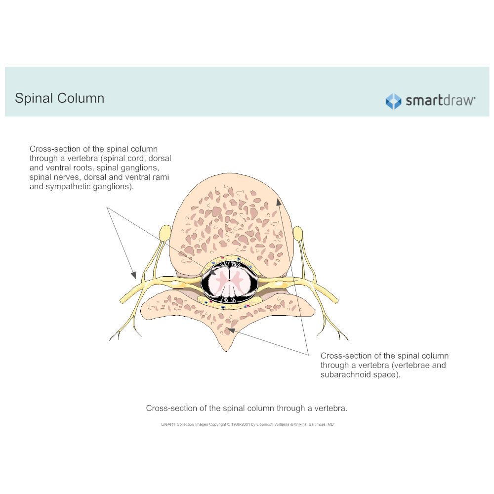 Example Image: Spinal Column