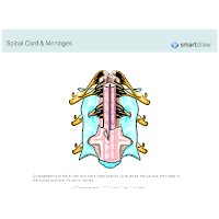 Spinal Cord & Meninges