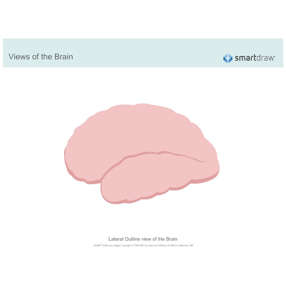 Example Image: The Brain - Lateral Outline