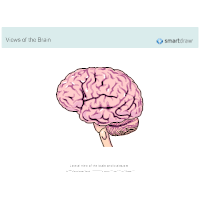 The Brain - Lateral View - 1