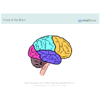 The Brain - Lobes