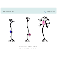Types of Neurons