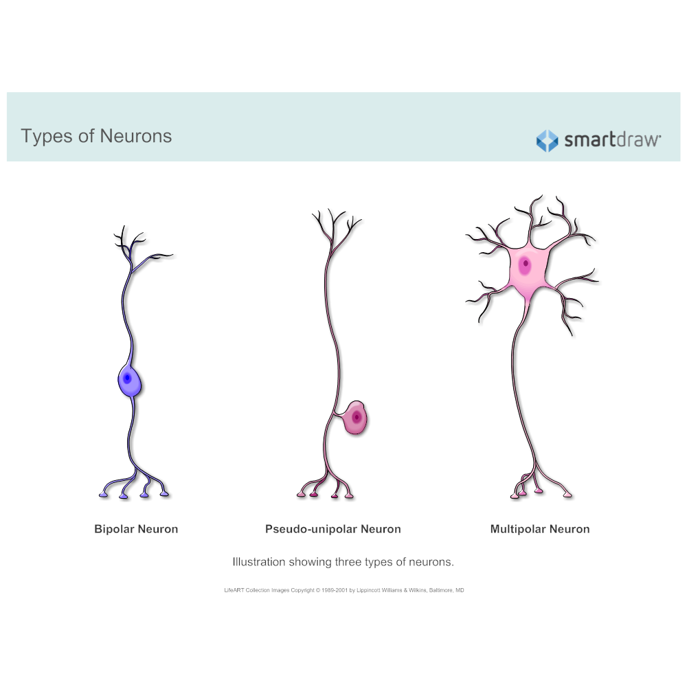 Example Image: Types of Neurons
