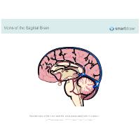 Veins of the Sagittal Brain