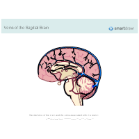 Veins of the Sagittal Brain