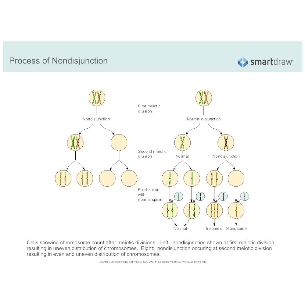 Example Image: Process of Nondisjunction