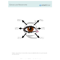 Extraocular Movements